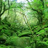 屋久島 もののけの森